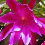 Cactus Flower 1 Poster