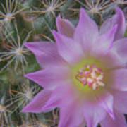 Cactus Flower #2 Poster