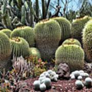 Cactus Galore  Poster