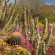 Cactus Garden II Poster