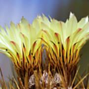 Cactus Life Poster