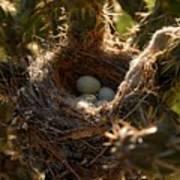 Cactus Nest Poster