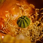 Cactus Pistil Poster