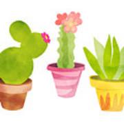 Cactus Plants In Pretty Pots Poster