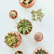 Cactus Pots Poster