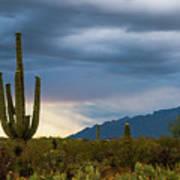 Cactus Sunset Saguaro National Park Arizona Poster