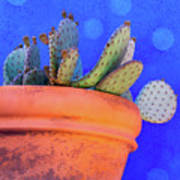 Cactus With Blue Dots Poster