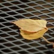 Caged Leaf Poster
