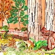 Calif. Redwoods Poster