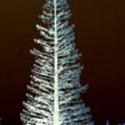 California High Sierra Pine Tree Poster