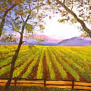 California Napa Valley Vineyard Poster
