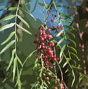 California Pepper Tree Leaves Berries Abstract Poster