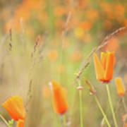 California Poppy Field 4 Poster