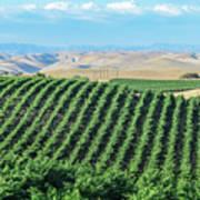 California Vineyards 2 Poster