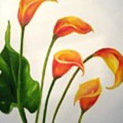 Calla Lilies Poster