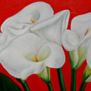 Calla Lillys  Poster