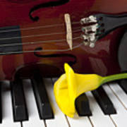 Calla Lily And Violin On Piano Poster