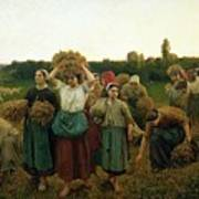 Calling In The Gleaners Poster