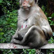 Cambodia Monkeys 3 Poster