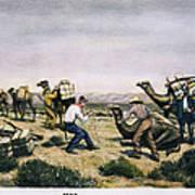 Camel Express, 1857 Poster