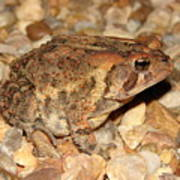 Camouflage Toad Poster