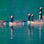 Canada Geese 2 Poster