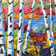 Canadian Birches By Prankearts Poster
