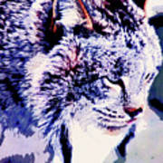 Canadian Lynx 1 Poster