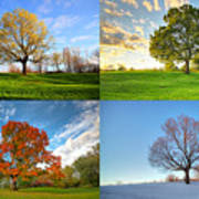 Canadian Seasons Poster by Mircea Costina Photography