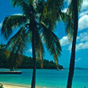 Caneel Bay Palms Poster by Kathy Yates