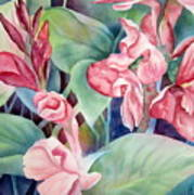 Canna Poster by Deborah Ronglien