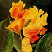 Canna Lilies Poster by Vickie Voelz