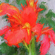 Canna Lily 3 Poster