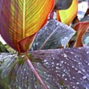 Canna Lily I  Poster