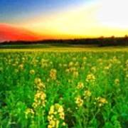 Canola Field Poster