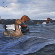 Canvasbacks Poster