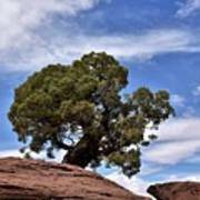 Canyonlands Tree Poster