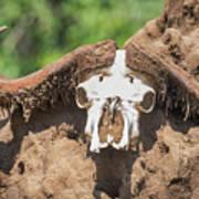 Cape Buffalo Skull Poster