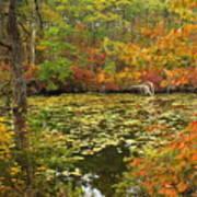 Cape Cod Kettle Pond Foliage Poster