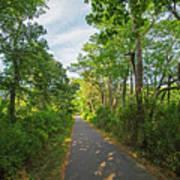 Cape Cod Rail Trail Trees Eastham Ma 2 Poster