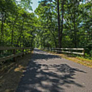 Cape Cod Rail Trail Trees Eastham Ma Fence Poster