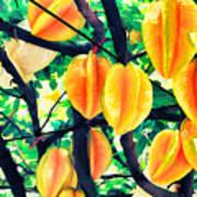 Carambolas Starfruits Poster
