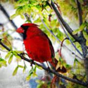 Cardinal 1 Poster