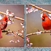 Cardinal Collage Poster