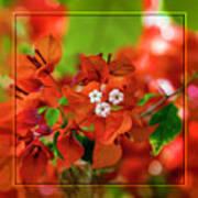 Caribbean Floral Surprise Poster