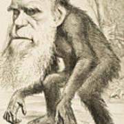 Caricature Of Charles Darwin Poster