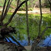 Carmel River At Gilmore Ranch Poster