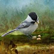 Carolina Chickadee Feeding Poster