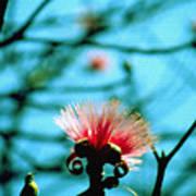 Carolina Flower And Bird Poster