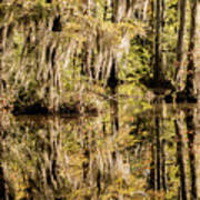 Carolina Swamp Poster